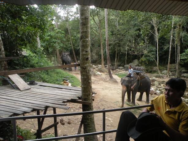 Platforma de unde ne suim pe elefant