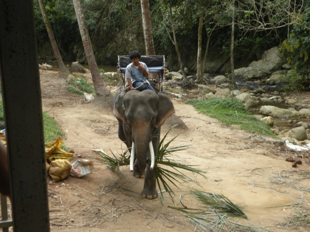 Elefantul nostru, creanga buclucasa plus cretuliul simpatic