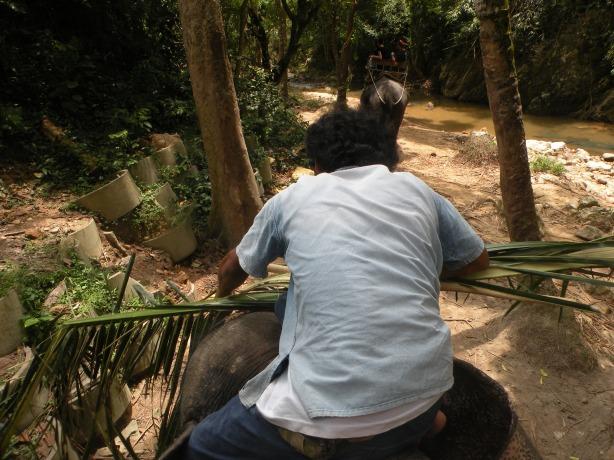 Luptandu-se cu elefantul pentru a-i lua creanga amenintatoare