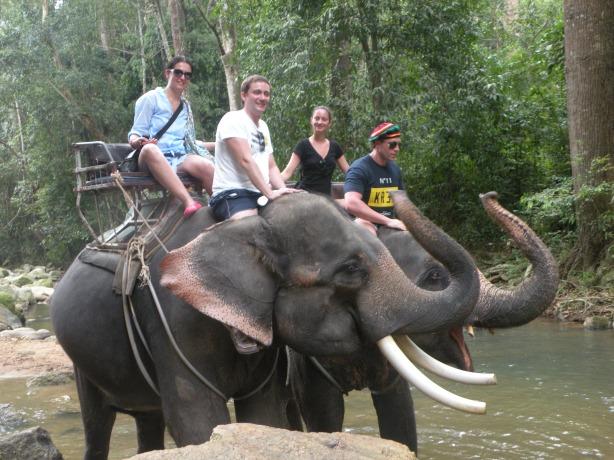 Salutul frumosilor elefanti