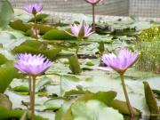 In Parcul de Orhidee din Kuala Lumpur