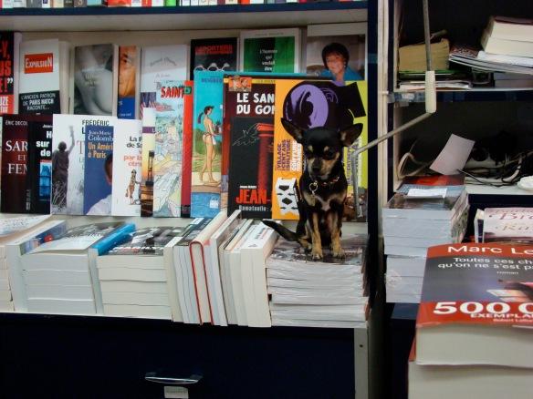 Chihuahua-ul din imagine sta PE carte, nu este coperta. :) Foto: ©Slowaholic