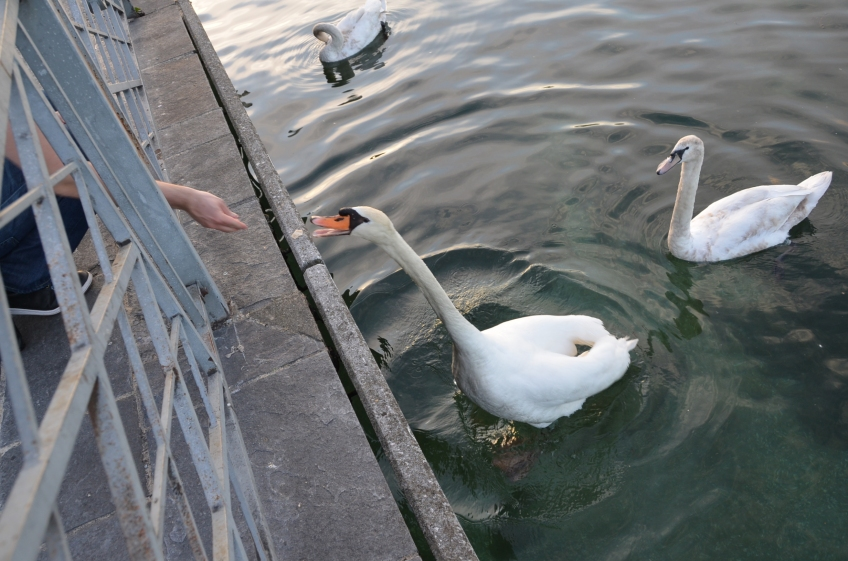 Pe malul Lacului Leman, in Geneva. Foto: ©Slowaholic