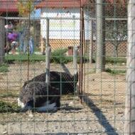 Ferma Animalelor, București. Foto: ©SLOWAHOLIC