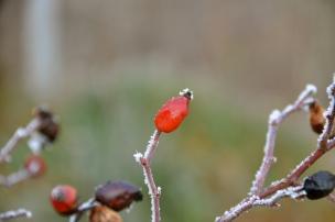 Foto: ©SLOWAHOLIC Dec. 2013