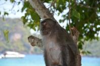 Monkey Beach, Koh Phi Phi, Thailand, March 2014. Photo: ©SLOWAHOLIC