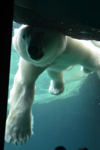 Viena Zoo. Foto: ©SLOWAHOLIC