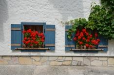 Red Geraniums. Sankt Gilgen, Austria. July, 2014. Photo: ©SLOWAHOLIC