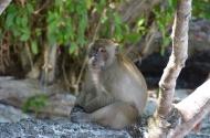 Monkey Island. Ko Phi Phi. Foto: ©Slowaholic