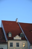 Cuib de barză. Stork's nest. Sibiu, Romania. July 2014 Photo: ©Slowaholic