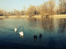 Două câte două. Two by two. Parcul Bordei, București. Foto: ©SLOWAHOLIC