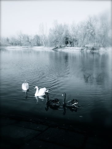 Abl-negru. Blanc and white. Parcul Bordei, București. Foto: ©SLOWAHOLIC