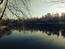 When swans fly. Când lebedele zboară. Parcul Bordei, București. Foto: ©SLOWAHOLIC