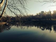 Zborul lebedelor. Swans' flight. Parcul Bordei, București. Foto: ©SLOWAHOLIC