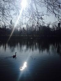 Doi sori. Two suns. Parcul Bordei, București. Foto: ©SLOWAHOLIC