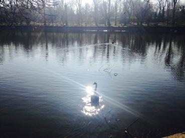 Sărutând soarele. Kissing the sun. Parcul Bordei, București. Foto: ©SLOWAHOLIC
