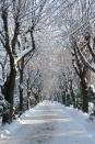 Cișmigiu, București. 31 Dec. 2014