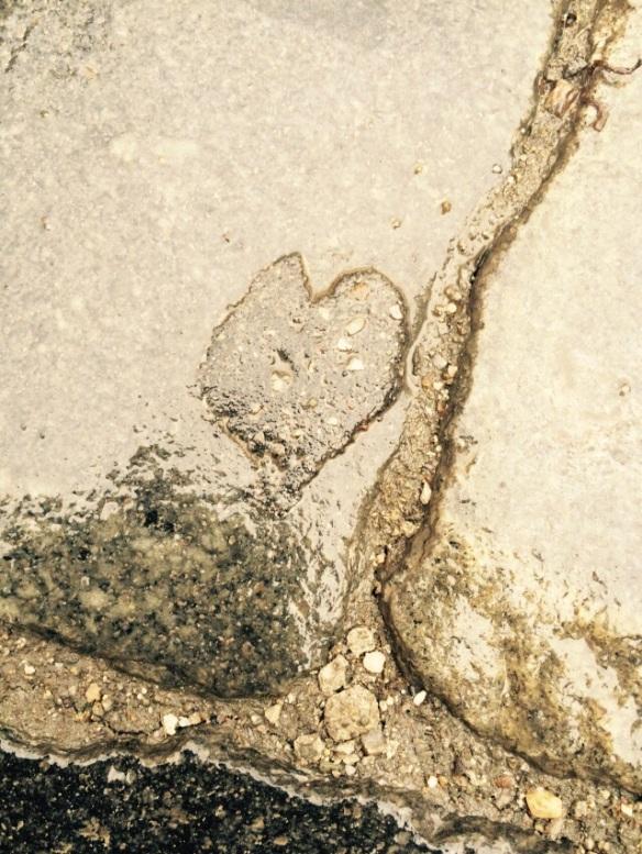 Chiar și în piatră, pe ploaie și pe frig, poți descoperi o comoară. :)  Caldarâm / Cluj, ian. 2015. Foto: ©Slowaholic