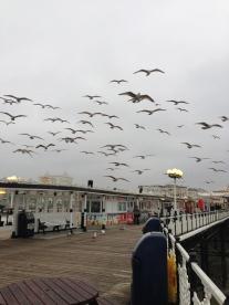 Plutind pe vânt. Brighton, UK. Ian. 2014. Foto: ©Slowaholic