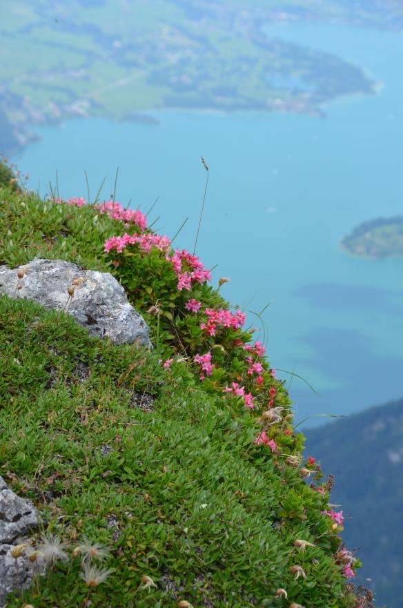 Schafberg, Austria. Foto: ©Slowaholic