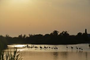 Flamingo. Camargue, Parcul Ornitologic. Foto: ©Slowaholic