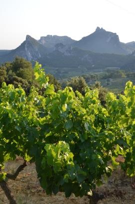 Suzette. Vaucluse. France. Foto: ©Slowaholic