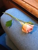 Varșovia. Erau aproape -20 de grade. Când am coborât din autobuz în centru orașului pregătit de sărbătoare, am găsit acest trandafir, proaspăt, pierdut de cineva. :)